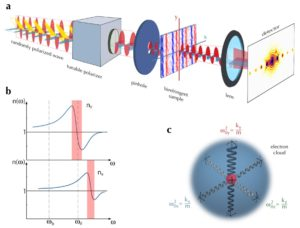 Schematic of Birefringent Coherent Diraction Imaging.(a) The collimated Polarized 633 nm laser is focused on a pinhole to generate the incident illumination on the Birefringent liquid crystal polymer thin lm. A detector placed 200mm from the sample is utilized to collect coherent diraction patterns for a given incident polarization of the photon beam. We use a tunable polarizer to prepare dierent polarization state of the incident beam. (b) Frequency dependence of refractive index along two axes in a Birefringent material. Birefringence is manifested as broken symmetry in the optical axes. Regions where the slope is negative corresponds to absorption band. Adapted from 42. (c)The Electron Oscillator/Lorentz atom model is used to describe the response of an atom in an optically anisotropic media. Quantum mechanics suggests we can describe the atom as a point-like nucleus bounded to an electron charged cloud by springs of dierent spring constant.